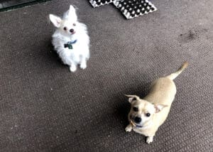 Rose Rodriguez's dogs