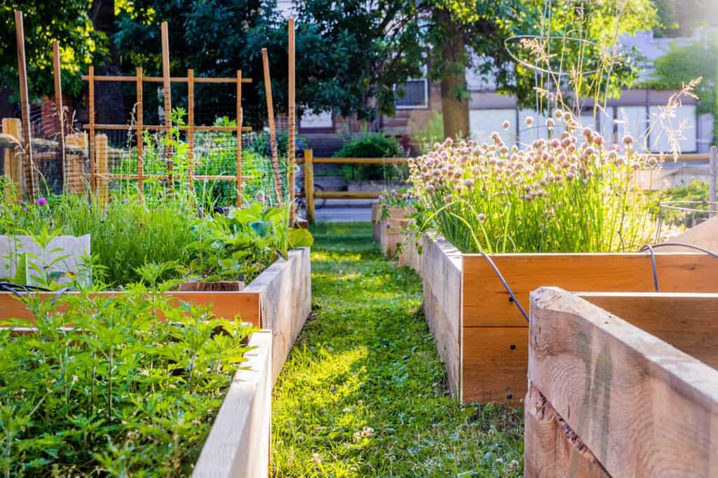Community garden at Trinfo.Cafe.